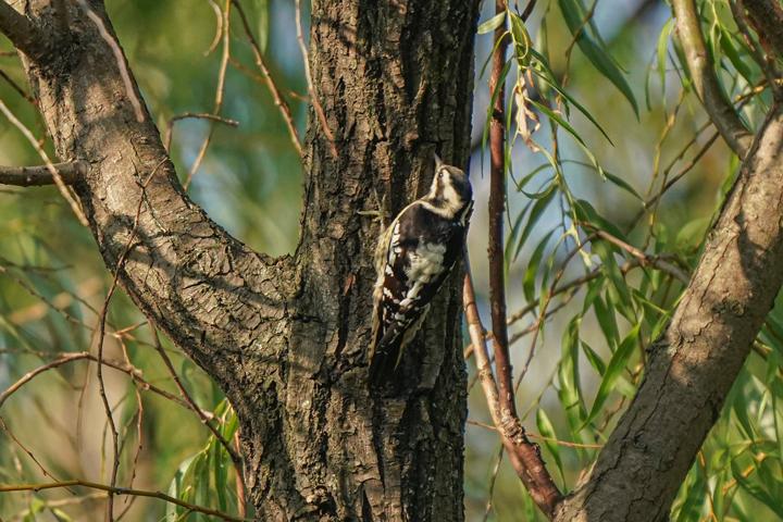 """又来了一个""""新朋友""""!共青森林公园记录在册鸟类增至109种"""